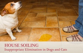 house soiling: Inappropriate Elimination in Dogs and Cats