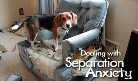 separation anxiety, pet health