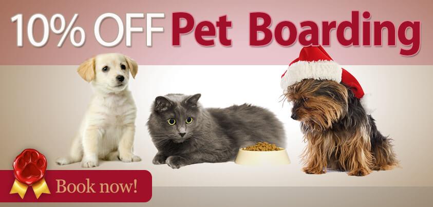 pet_boarding_promo