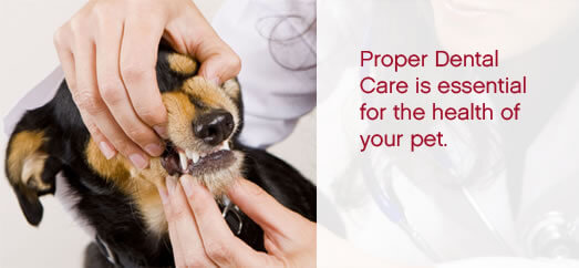 proper dental care is essential for the health of yourpet