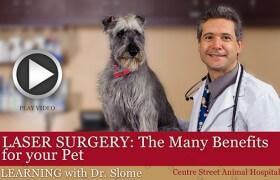 Benefits of Pet Laser Surgery