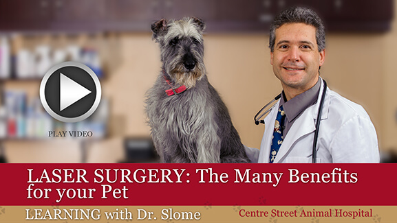 Benefits of Pet Laser Surgery
