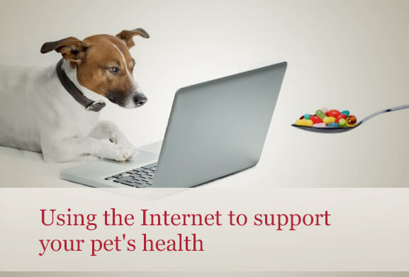 Pet internet resources