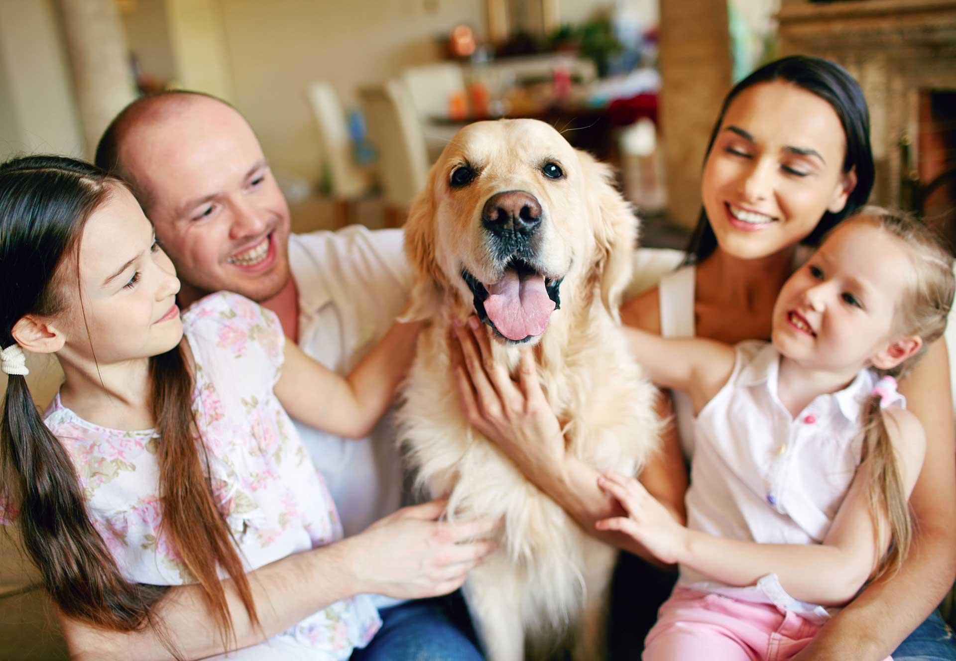 Dog Family Petting