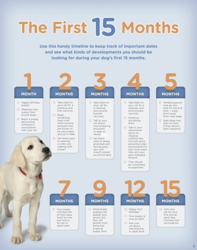 Hill's puppy book - the first 15 months