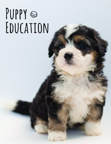 Click for puppy education