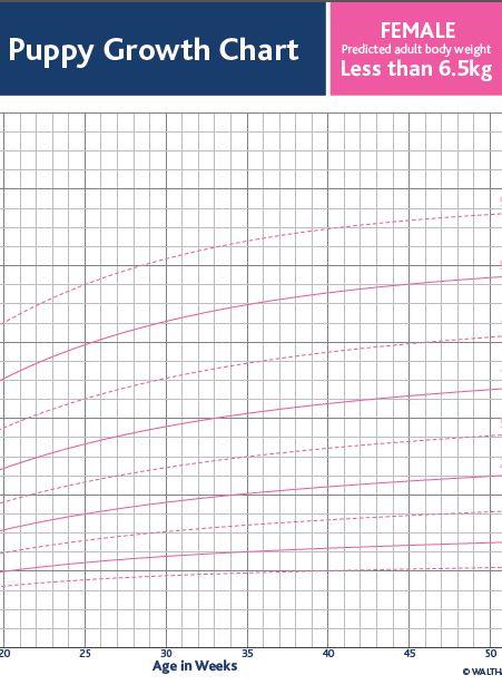 Female Puppy Growth Chart